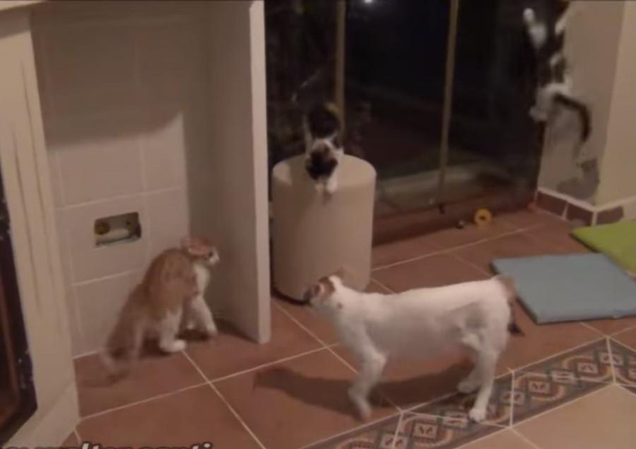 怯える子猫たち