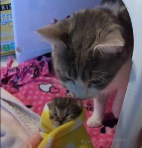 スリスリ親子猫