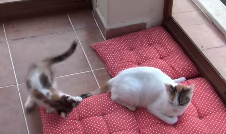 イラつく母猫