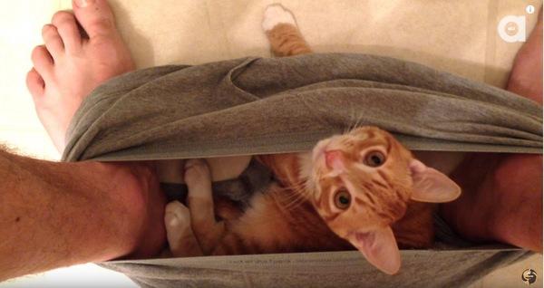 下着の中の猫