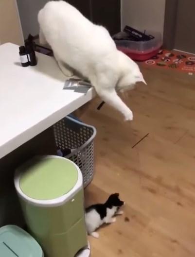 おもちゃを持つ母猫