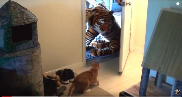 大きなトラのぬいぐるみとチャトラ猫