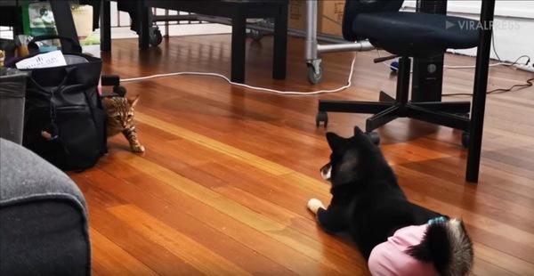 向き合う犬と猫