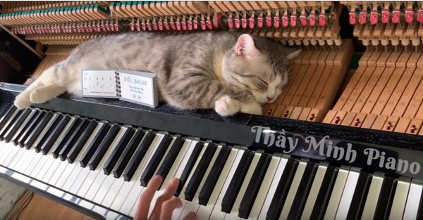 鍵盤の上で眠る猫