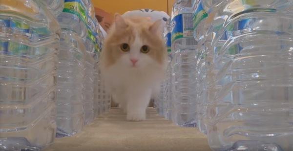 ボトルの間から顔を出す猫