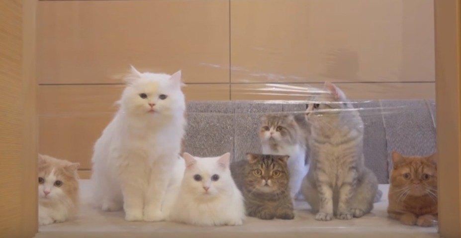見えない壁を見つめる猫たち