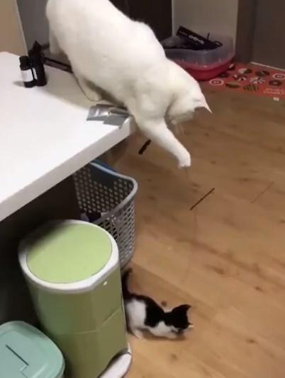 おもちゃを使う母猫