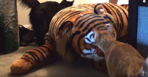 大きなトラのぬいぐるみと2匹の猫