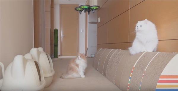 ドローンを見つめる猫