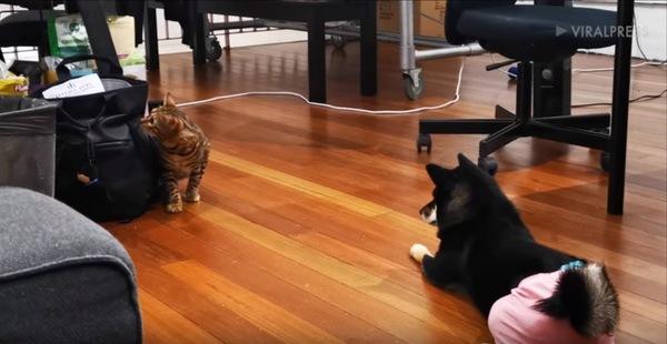 恐る恐る前に出る猫