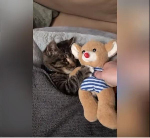 ぬいぐるみを渡される猫