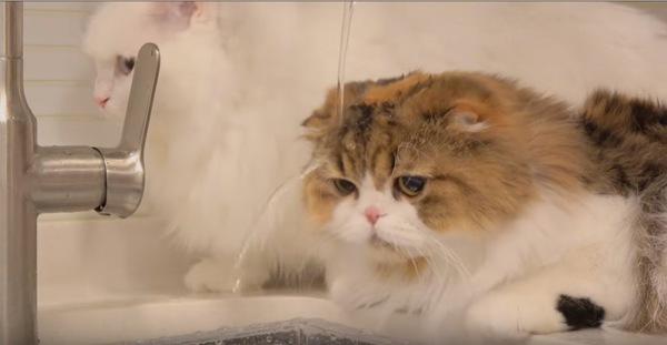 水を被りジッとする猫