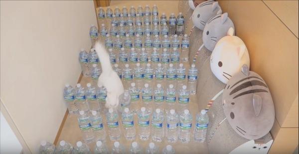 ボトルを倒して進む猫