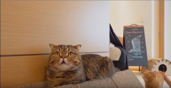 怯える猫と見つめる猫