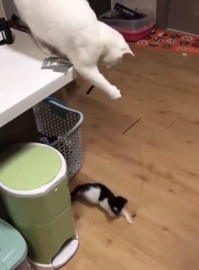 必死になって追いかける子猫