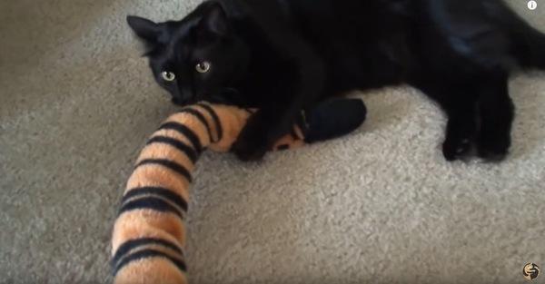 ぬいぐるみの尻尾にじゃれる猫