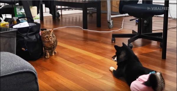 犬を見る猫