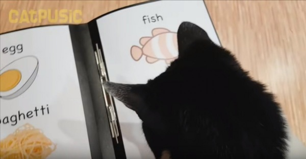 メニューを見る猫