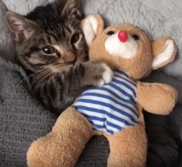 落ち着く猫