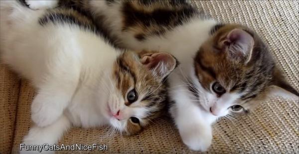 ぴったりくっつく子猫