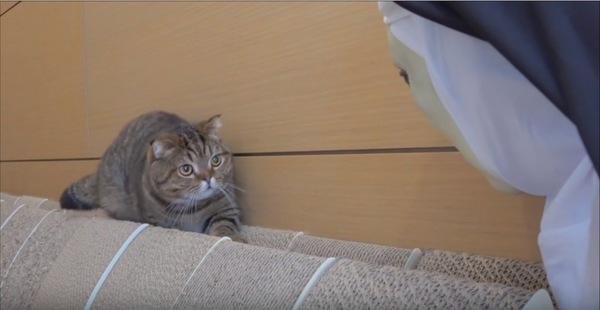 後退りする猫