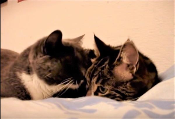 顔を近付ける猫