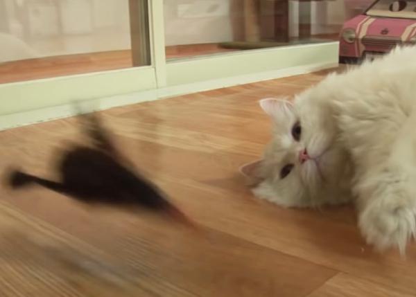 おもちゃで遊ぶのもめんどくさい猫