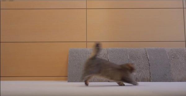 躍動感溢れる猫