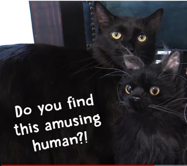 ぬいぐるみと黒猫