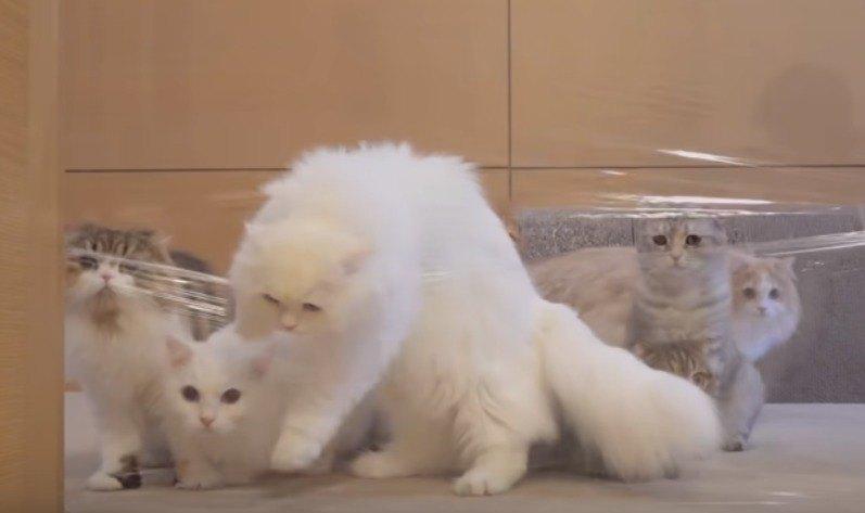 ラップを破り飛び出す猫