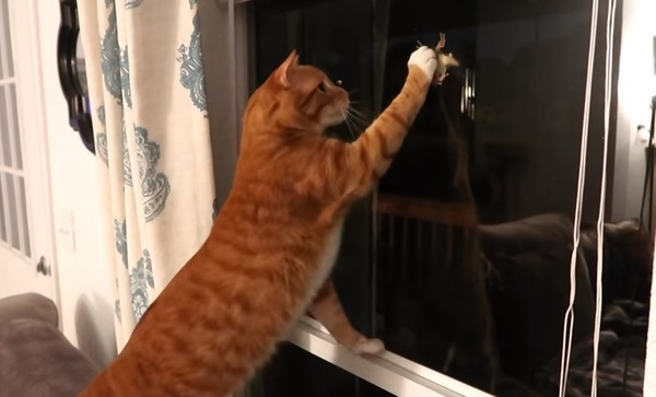 窓のそばのチャトラ