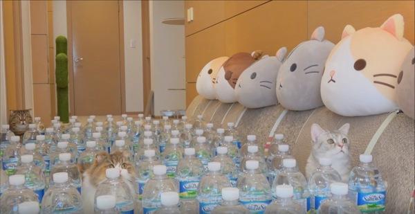 ボトルの中から顔を出す猫たち