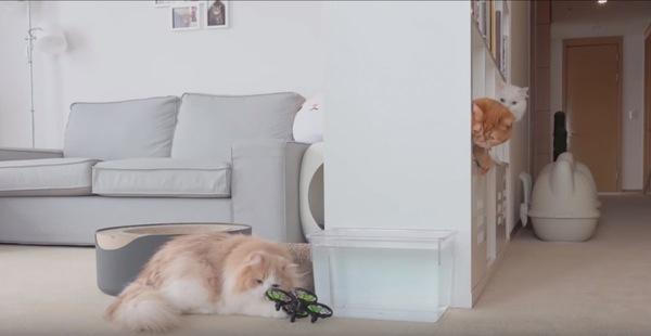 ドローンを仕留める猫