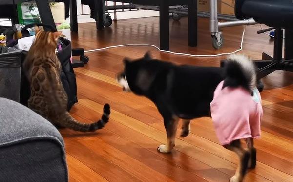吠える犬と驚く猫