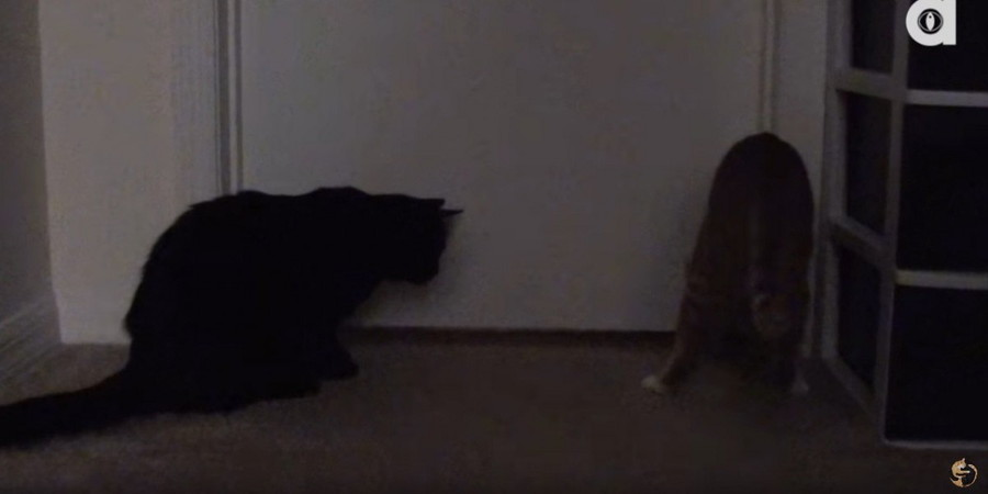 ドアの前にいる猫