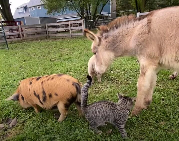牛とも仲良し