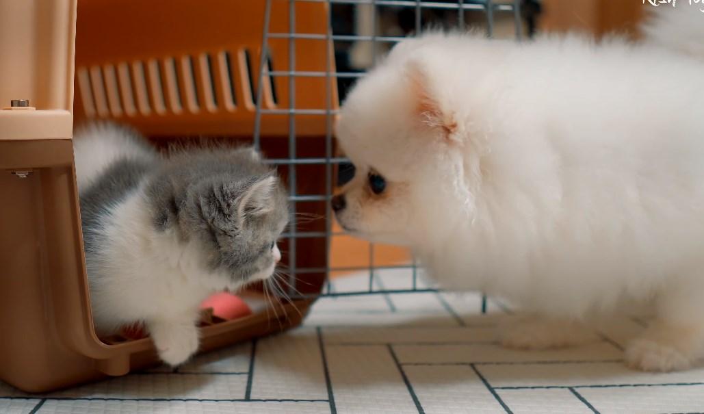 挨拶する犬と猫