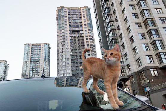 猫タクシー