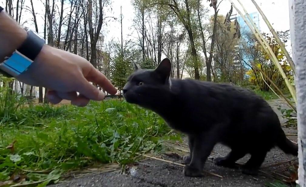 手の匂いを嗅ぐ猫