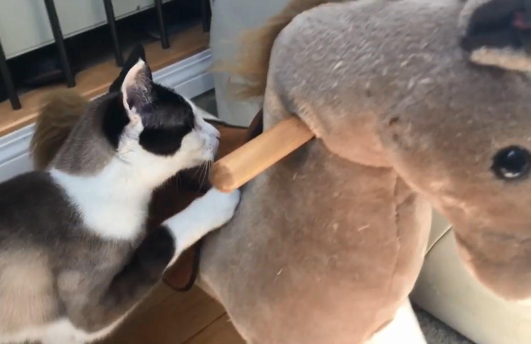 おもちゃに前足をかける猫