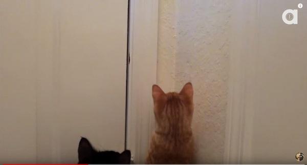虫を見ている猫