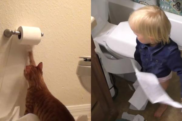 トイレットペーパーでイタズラする赤ちゃんと猫