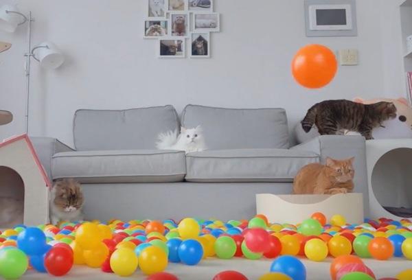 猫に降り注ぐボール