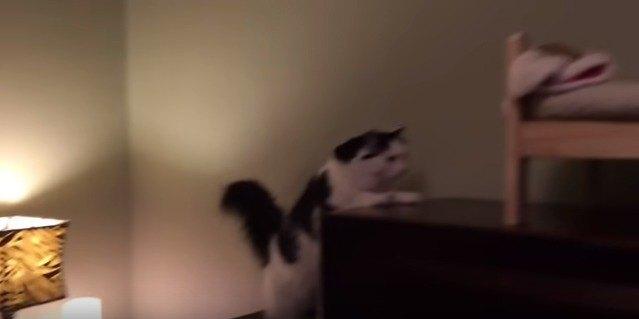 棚を登る猫