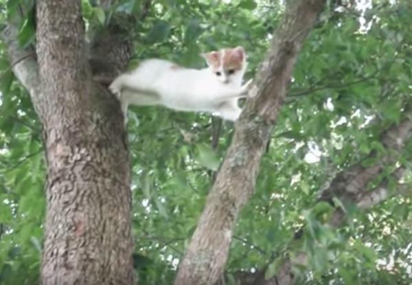 木から降りれない子猫