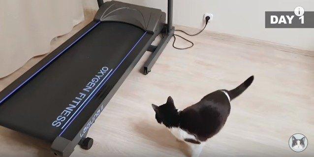 ジョギングマシンにびっくりする猫