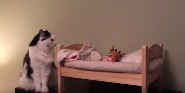 ベッドの様子を伺う猫