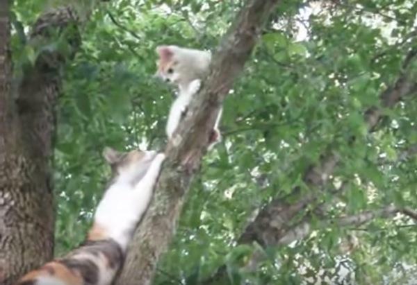救助に向かう母猫