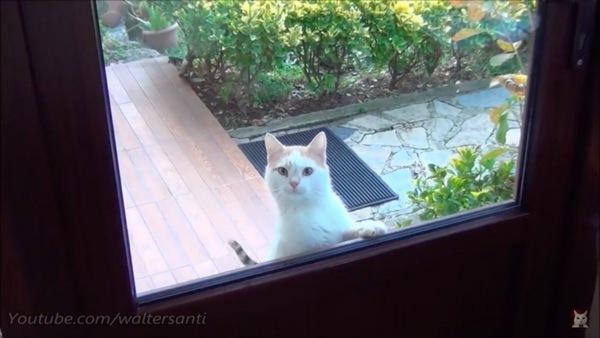 窓の外から覗く猫