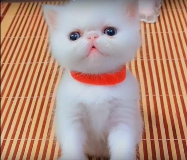 寝れなかった赤い首輪の子猫